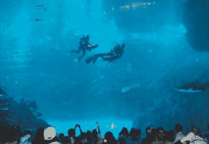 dubai aquarium mall1-min